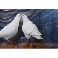 鸽子 庞大同摄景作品 收藏精品推